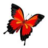 When I see a butterfly I smile